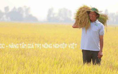 Nâng tầm chuỗi giá trị nông nghiệp Việt
